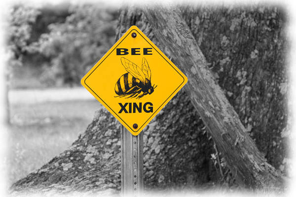 Photograph - Bee Crossing by Patricia Montgomery