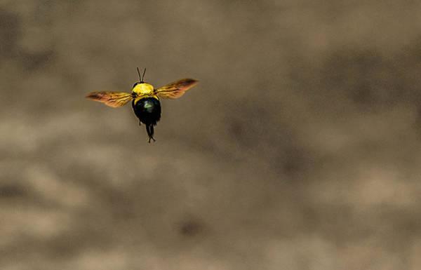 Bee Dance Art Print