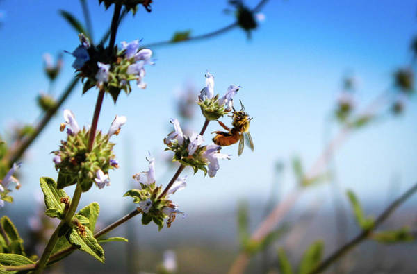 Photograph - Bee Free by Alison Frank