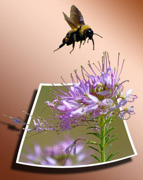 Photograph - Bee Free by Shane Bechler