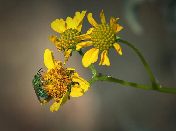 Photograph - Bee Happy by Elaine Malott