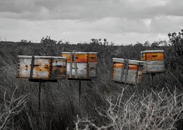 Wall Art - Photograph - Bee Hives by Kyle Goetsch