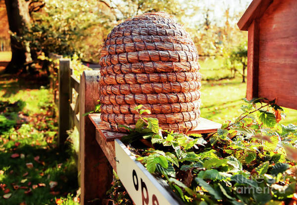 Photograph - Bee House In Country Place by Ariadna De Raadt
