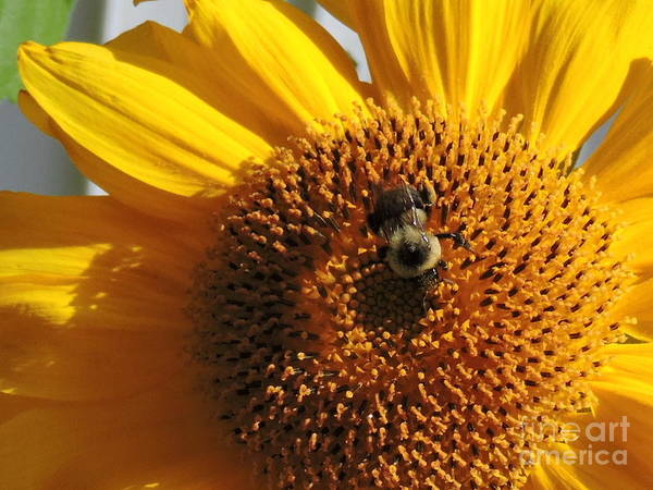 Wall Art - Photograph - Bee In Flower by Michael Wayne Gulliver
