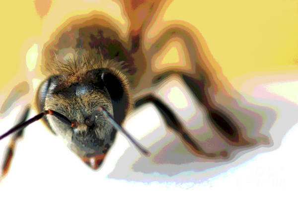 Wall Art - Photograph - Bee In Macro 5 by Micah May