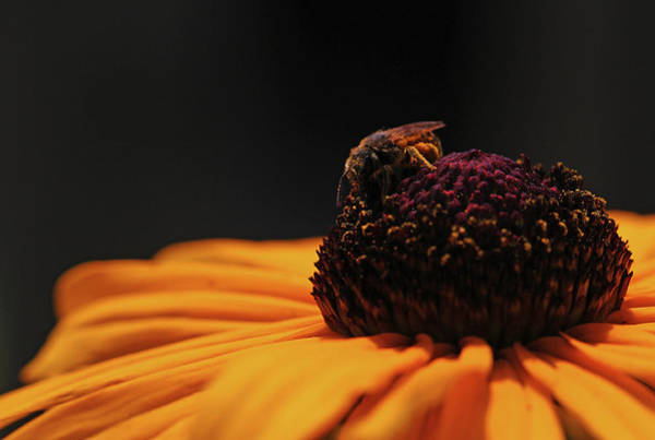 Photograph - Bee Inspiring by Juergen Roth