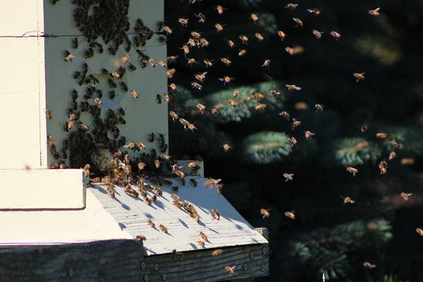 Photograph - Bee Keepers Hive Chicago Botanical Gardens by Colleen Cornelius