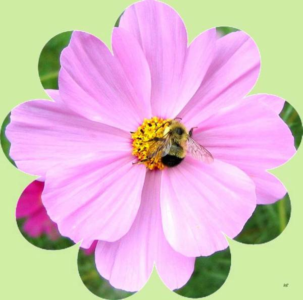 Wall Art - Photograph - Bee-line 1 by Will Borden