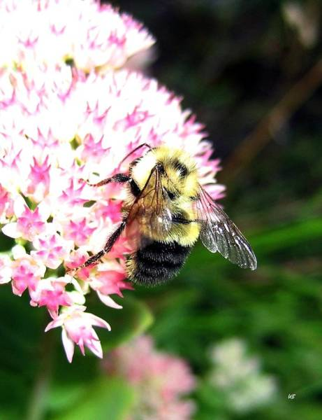 Wall Art - Photograph - Bee-line 2 by Will Borden