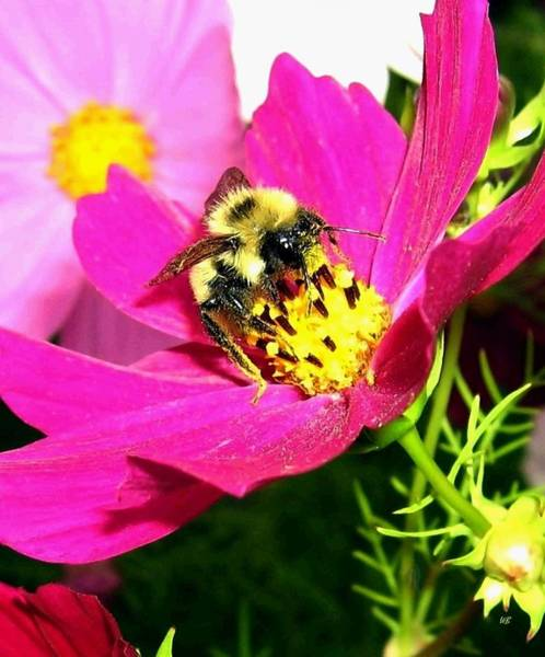 Wall Art - Photograph - Bee-line 3 by Will Borden