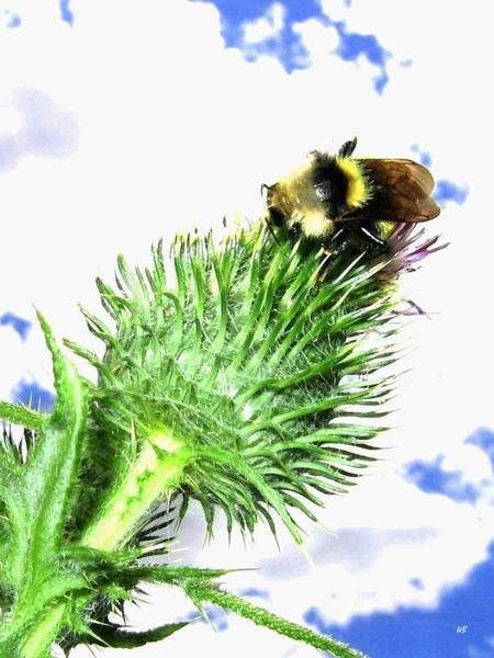 Wall Art - Photograph - Bee-line 4 by Will Borden