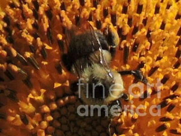 Wall Art - Photograph - Bee by Michael Wayne Gulliver