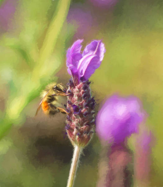 Photograph - Beehold by Marilyn Wilson