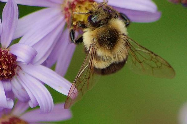 Wall Art - Photograph - Bee On Purple by Meeli Sonn