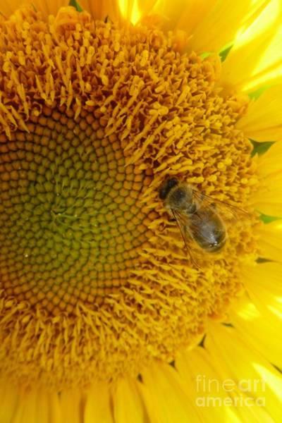 Photograph - Bee On Sunflower 2 by Jean Bernard Roussilhe