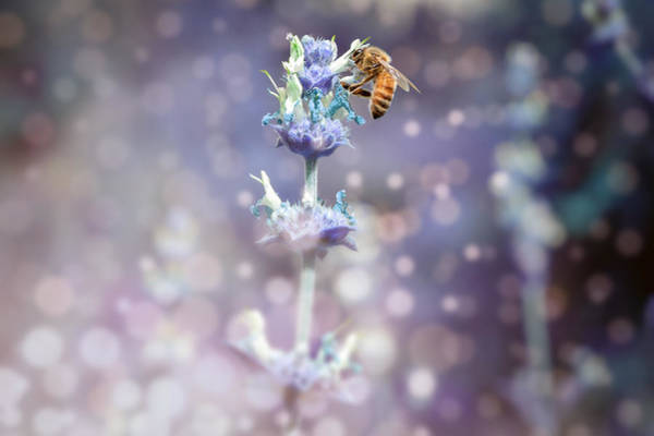 Photograph - Bee On Top by Alison Frank