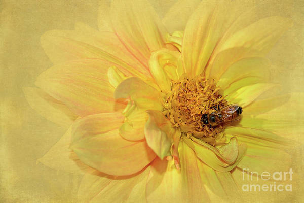 Wall Art - Photograph - Bee On Yellow Dahlia By Kaye Menner by Kaye Menner