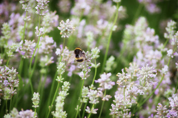 Honey Photograph - Bee Pollen by Martin Newman