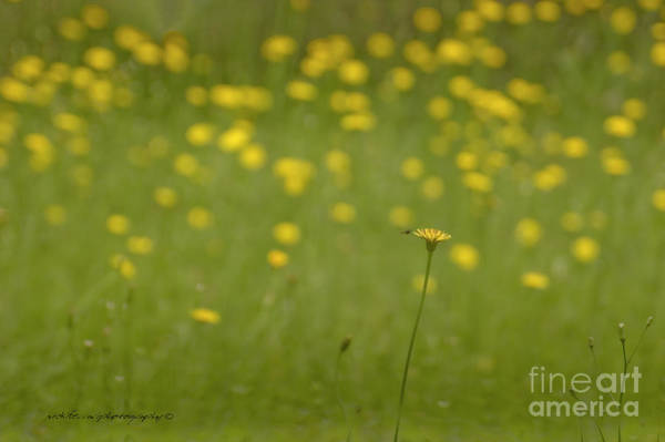 Photograph - Bee Straight Daisy by Vicki Ferrari