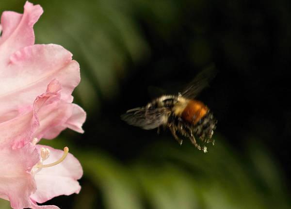 Photograph - Bee Mine Tonight by Marilyn Wilson