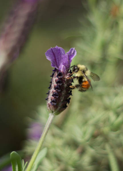 Photograph - Bee The One by Marilyn Wilson