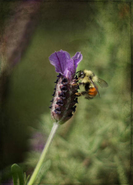 Photograph - Beeyond by Marilyn Wilson