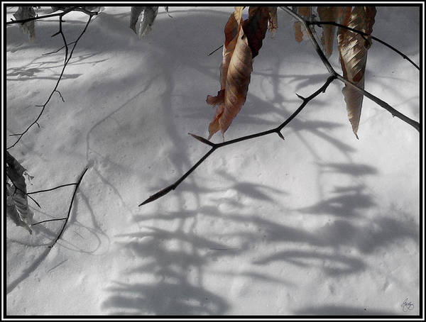 Photograph - Beech Leaves In Winter by Wayne King