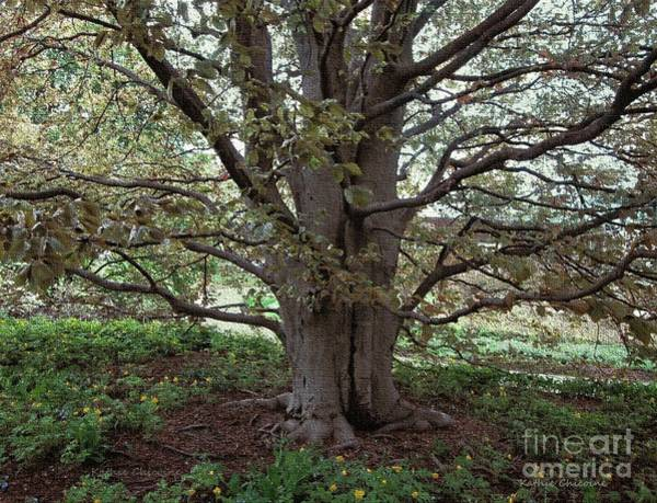 Photograph - Beech Tree by Kathie Chicoine