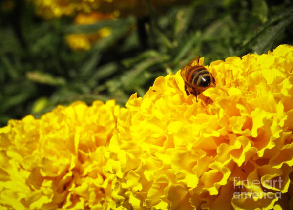 Photograph - Beehind by Robert Knight
