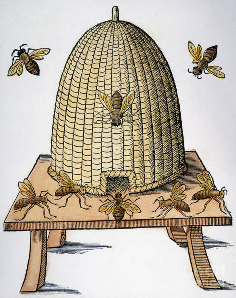 Wall Art - Photograph - Beehive, 1658 by Granger