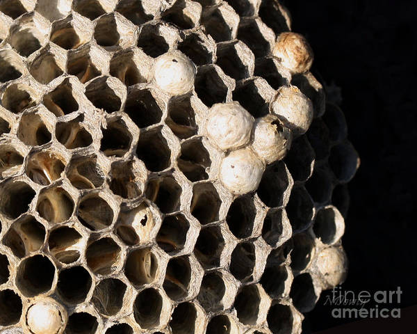 Photograph - Bee's Nest by Natalie Dowty