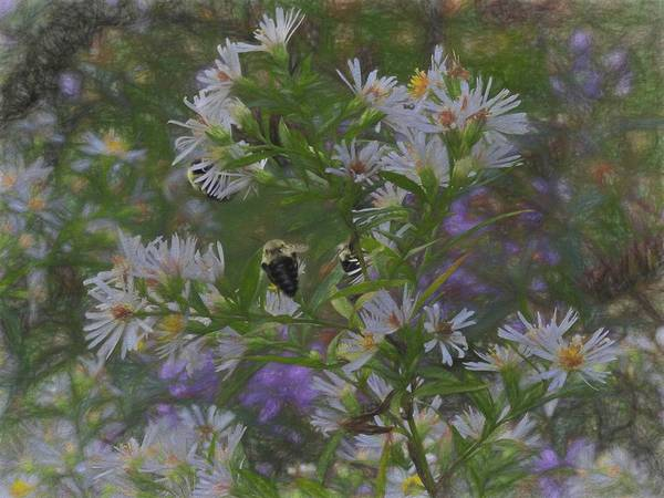 Photograph - Bees On Flowers by Rusty R Smith