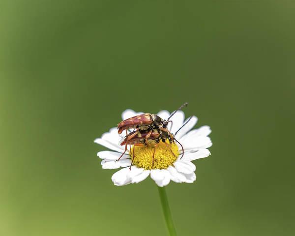 Photograph - Beetle Boinkey by Brian Hale
