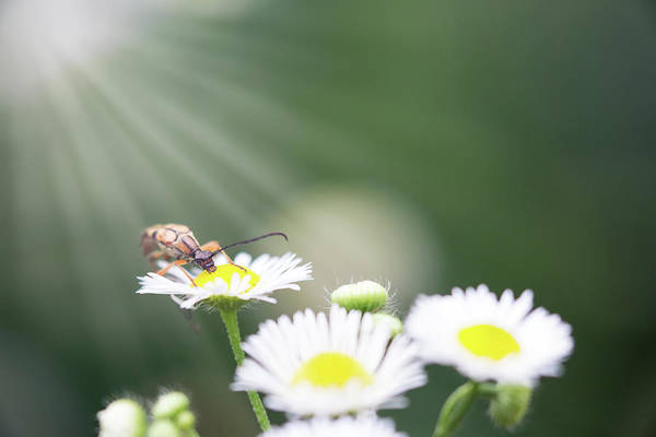 Photograph - Beetle In The Sun by Brian Hale