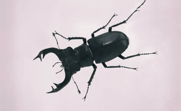 Wall Art - Photograph - Beetle by Martin Newman