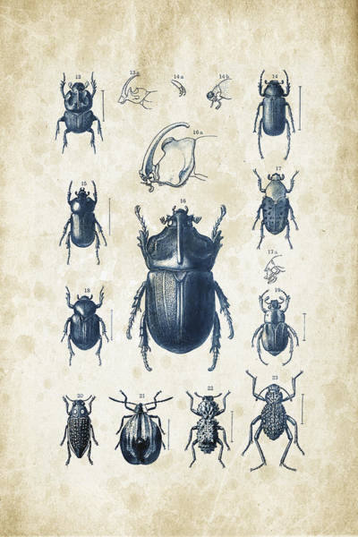 Wall Art - Digital Art - Beetles - 1897 - 02 by Aged Pixel