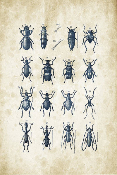 Wall Art - Digital Art - Beetles - 1897 - 03 by Aged Pixel