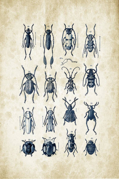 Wall Art - Digital Art - Beetles - 1897 - 04 by Aged Pixel
