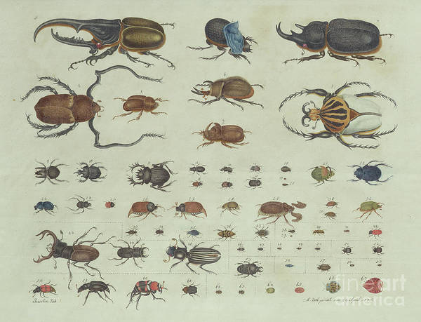 Evolution Painting - Beetles by Aloys Zotl