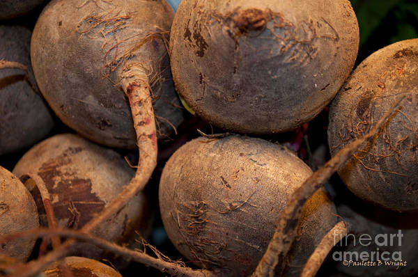 Photograph - Beets Me by Paulette B Wright