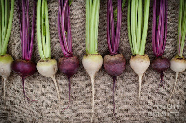 Beet Wall Art - Photograph - Beets by Tim Gainey