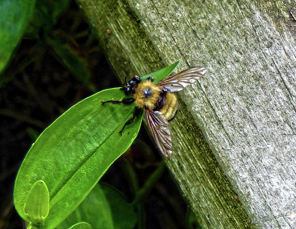 Photograph - Beezzz Happy by Wild Thing