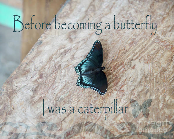Wall Art - Photograph - Before Becoming A Butterfly  by Anita Faye