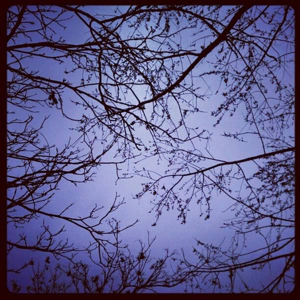 Photograph - Before The Blizzard That Wasn't...dead by Tammy Winand