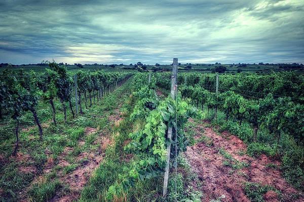 Photograph - Before The Harvesting by Radek Spanninger