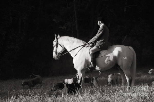 Photograph - Before The Hunt In Black And White by Angela Rath