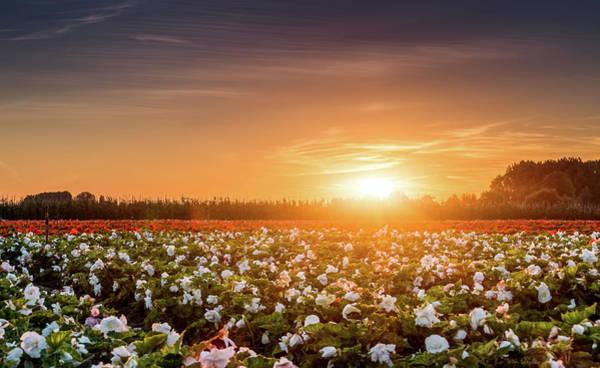 Photograph - Begonia Farm by Wim Lanclus