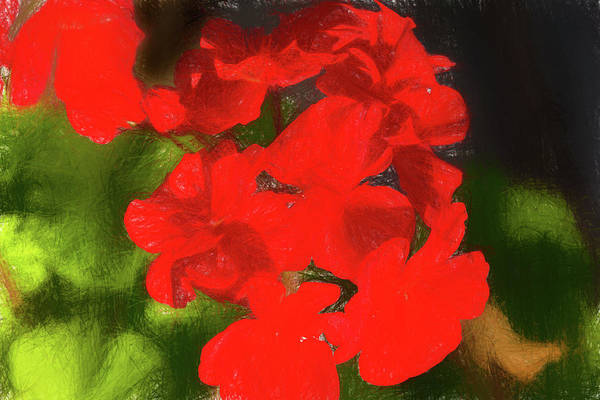 Photograph - Begonia Sketch by Kay Brewer