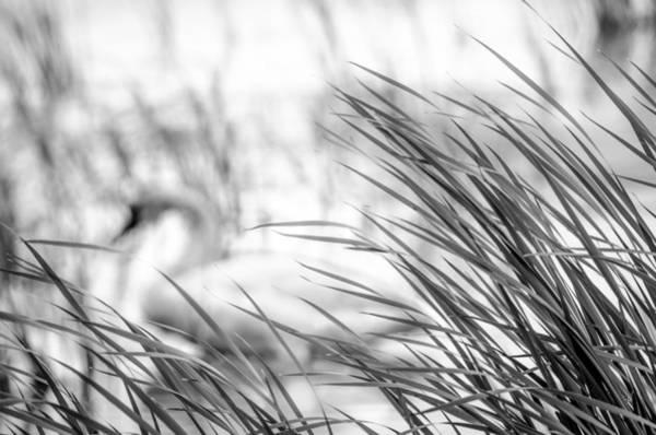 Behind The Grass Art Print