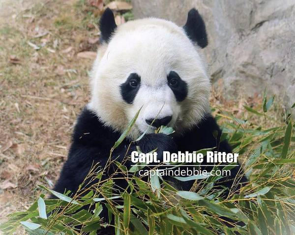 Photograph - Bei Bei 5762 by Captain Debbie Ritter